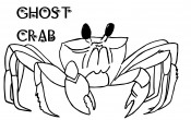 ghost crab, sea creature, shore