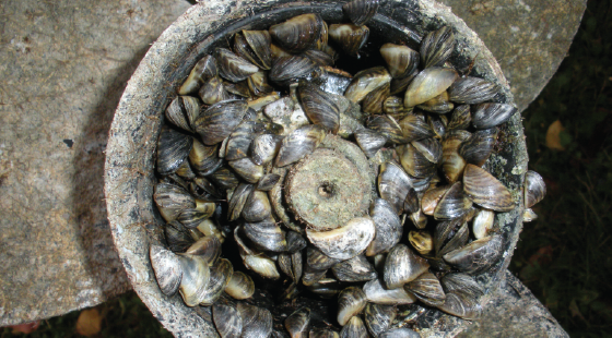 invasive species, zebra mussels, prop