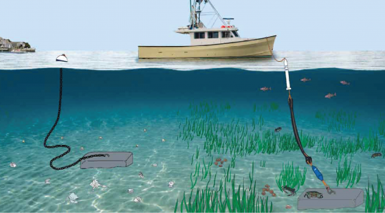 mooring, conservation, seagrass bed