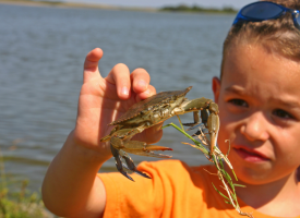 Kids Environmental Lesson Plans