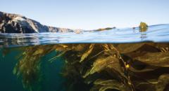 ocean, kelp, stay home