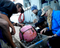 shipmates, research, plastic, gooseneck barnacles, North Pacific, gyre, plastic pollution