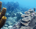 marine science, coral reefs, biodiversity, Caribbean