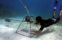 Baited Remote Underwater Video, BRUV, shark census, shark survey, citizen science