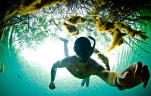 selfie, snorkeling, Caribbean, mexico, mangroves, gopro