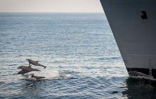 Navy agrees to stop sonar practice in critical dolphin and whale habitat